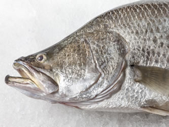 Highest quality barramundi